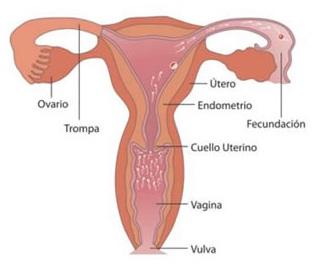 debe haber penetración para un embarazo